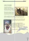 Descarregue a versão em pdf - Colégio Monte Flor - Page 7