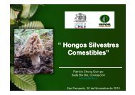 Hongos silvestres comestibles - Sistema de Gestión Forestal