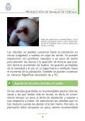 PRODUCCIÓN DE SEMILLAS DE CEBOLLA - AgroCabildo - Page 4