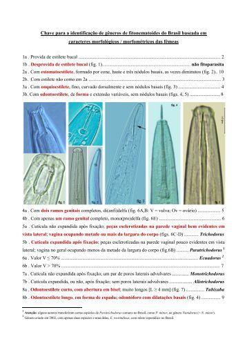 Chave para identificação de gêneros de fitonematoides do Brasil