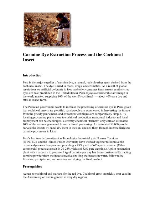 Carmine Dye Extraction Process And The Cochineal Insect