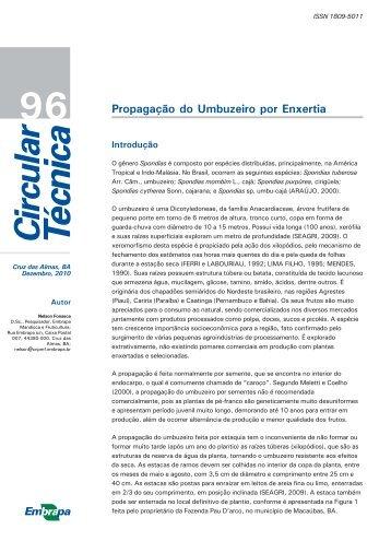 Propagação do Umbuzeiro por Enxertia - Embrapa Mandioca e ...