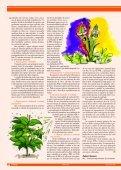 Soja As plantas daninhas causam grandes ... - Grupo Cultivar - Page 5