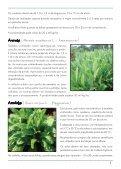 Hortaliças não convencionais / EPAMIG-DPPU - Portal Conselhos MG - Page 3