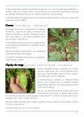 Hortaliças não convencionais / EPAMIG-DPPU - Portal Conselhos MG - Page 7