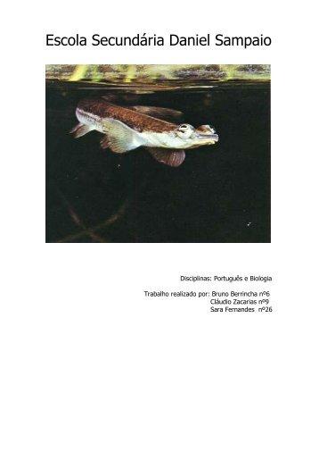 Peixe Quatro-Olhos - Bibliblog