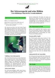 Der Schwarzspecht und seine Höhlen - Deutsche Wildtier Stiftung
