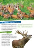 Geben Sie dem Rothirsch Ihre Stimme! - Deutsche Wildtier Stiftung - Seite 2