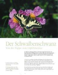 er Schwalbenschwanz - Deutsche Wildtier Stiftung