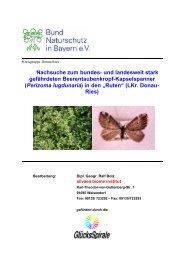 """(Perizoma lugdunaria) in den """"Ruten"""" -  Bund  Naturschutz ..."""