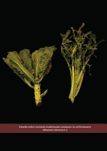 la col brotonera (Brassica oleracea L.) - Fundació Miquel Agustí
