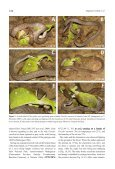Crottini_et_al_Herpetology_Notes_Volume3_pages127-131 - Page 2