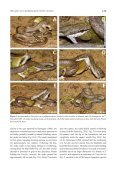 Crottini_et_al_Herpetology_Notes_Volume3_pages127-131 - Page 3