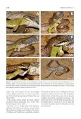 Crottini_et_al_Herpetology_Notes_Volume3_pages127-131 - Page 4