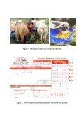 experiencias con ganado estabulado utilizando pejibaye - CORFOGA - Page 6