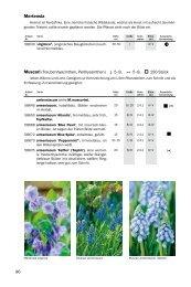 Blumenzwiebeln M-S