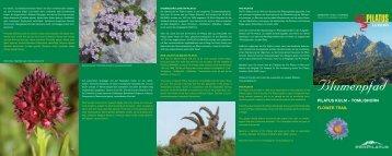 Blumenpfad PILATUS KULM – TOMLISHORN FLOWER TRAIL