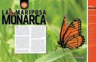 La Mariposa Monarca - México Desconocido
