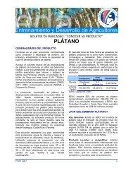 PLÁTANO - Cuenta del Milenio - Honduras