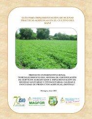 Guía para la implementación de Buenas Prácticas Agrícolas ... - IICA