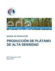producción de plátano de alta densidad - Cuenta del Milenio ...