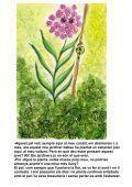 13 La planta presumida - Contes del Món - Page 5