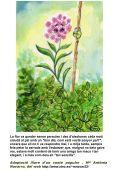 13 La planta presumida - Contes del Món - Page 7
