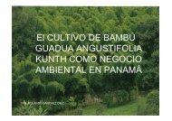 El CULTIVO DE BAMBÚ GUADUA ANGUSTIFOLIA KUNTH ... - cinap