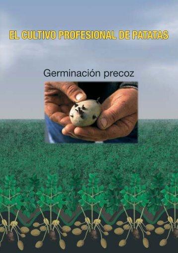 El cultivo de patatas profesional; germinación precoz - Nivaa