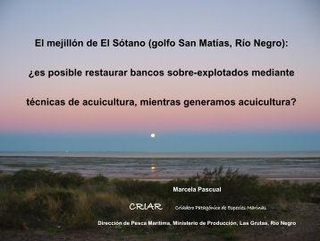 El mejillón de El Sótano (golfo San Matías, Río Negro) - cenpat