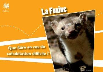 La Fouine - Portail environnement de Wallonie