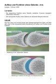 Bewegungsapparat - Knochen & Gelenke - GIDA - Seite 7