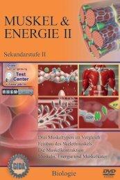 Muskel & Energie II - GIDA