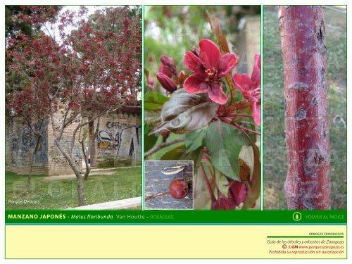 árboles frondosos 2 - Parques Zaragoza