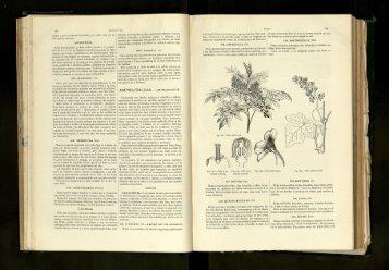 Ampelidáceas - Amplidaceae. - cdigital