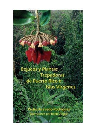 Bejucos y plantas trepadoras de Puerto Rico e Islas Vírgenes