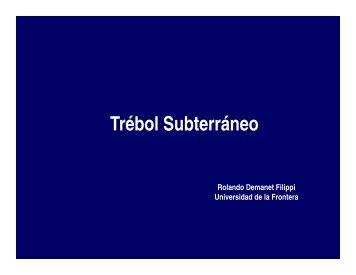 Trébol Subterráneo - www.PraderasyPasturas.com