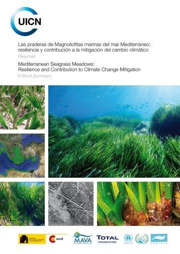 Las praderas de Magnoliofitas marinas del mar Mediterráneo ...