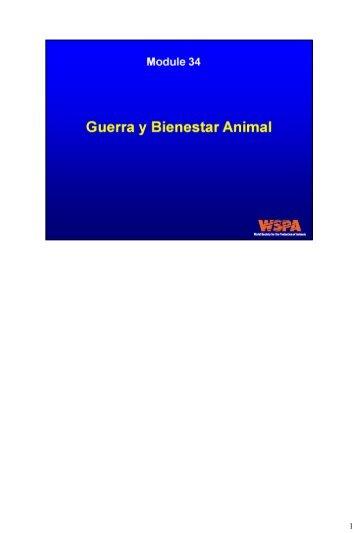 La Guerra y el Bienestar Animal - WSPA