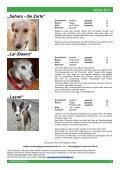 """Protection News"" Winter 2011 - Greyhound Protection International - Seite 7"