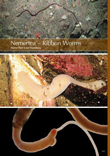 Nemertea - Marine Benthic Fauna of Chilean Patagonia