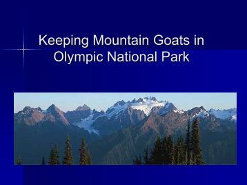 Keeping Mountain Goats in Olympic National Park