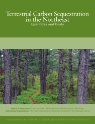 Terrestrial Carbon Sequestration in the Northeast: Quantities and