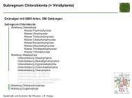 Subregnum Chlorobionta (= Viridiplanta) - Biologie, Universität Ulm