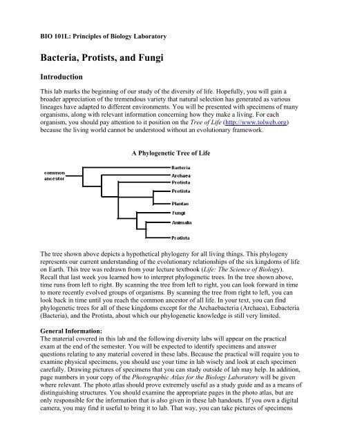 Bacteria Protists And Fungi