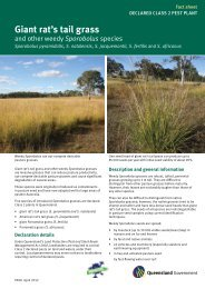 Giant rat's tail grass - Department of Primary Industries