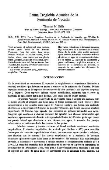 Fauna Troglobia Acuatica de la Peninsula de Yucatin - Texas A&M ...