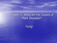 Chapter 2: What are the Causes of Plant Diseases