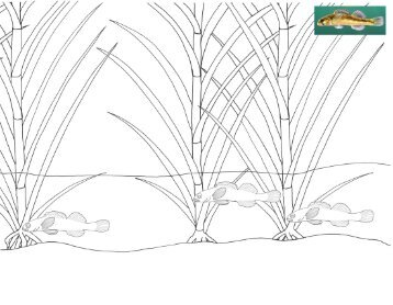 Slackwater Darter Coloring Page
