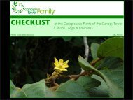 CHECKLIST of the Conspicuous Plants of the Canopy Tower ...